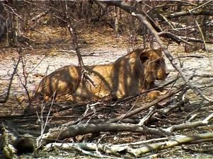 On safari-Namibia