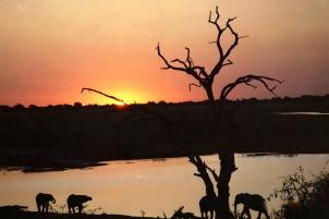 Chobe Botswana