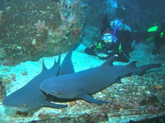 Diana & pile of snoozing sharks-Cocos Island