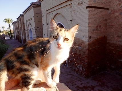 Marrakesh greeter
