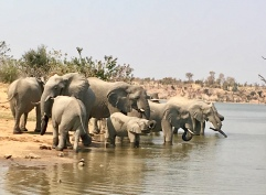 Family at watering hole
