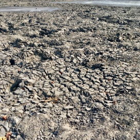 Elephant tracks - dried up watering hole
